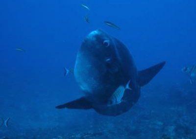 Mola Pelegri